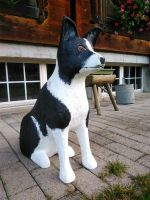 Border_Collie_Holz_3